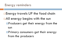 what travels through a food chain or web images Catalyst where does all energy in the food web begin ppt download jpg