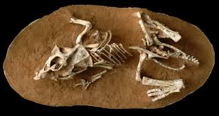 how long did it take to hatch a dinosaur egg study says 3 6 months