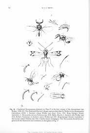 smith k g v 1987 darwin u0027s insects charles darwin u0027s
