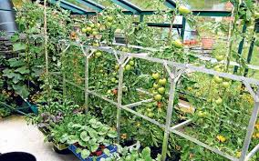 what to grow in a greenhouse in winter the telegraph