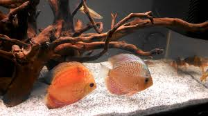 glass fish tanks tropical tank wallpaper loversiq