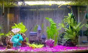 tacky fishtank search tacky tanks