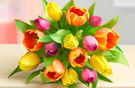 Flowers Colors Meanings - learn all about each tulip color meaning petal talk