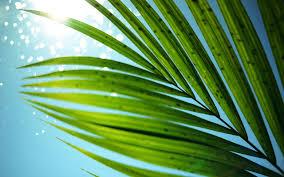 Palm Tree Wallpaper 2560x1600 Widescreen Hd Close Up Scream Pinterest
