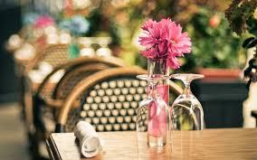 download cafe vase wallpaper 7377 1680x1050 px high resolution