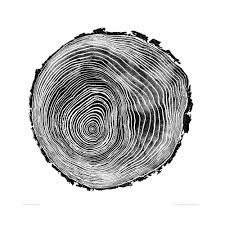 willow cross section of tree trunk woodcut by bryan nash gill