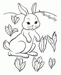 baby bunny coloring pages toddlers 41738