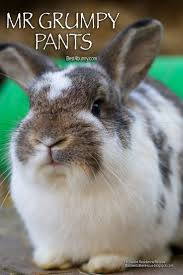 117 best disapproving bunnies images on pinterest funny bunnies