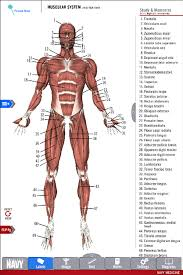 Study Anatomy And Physiology Online Anatomy Study Guide Android Apps On Google Play