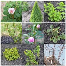 Small Shrubs For Front Yard - create a low maintenance flower bed our front yard progress