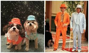 dumb and dumber costumes dumb and dumber lloyd tux dog costume orange with same day