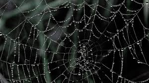 1080p halloween wallpaper spider web halloween wallpaper