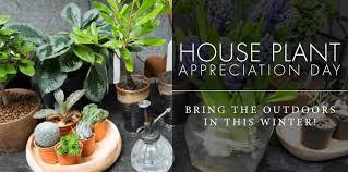 benefits of houseplants houseplant appreciation day the benefits of houseplants currans