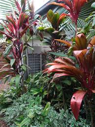 353 best tropical gardens images on pinterest tropical plants