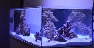 led reef lighting reviews the best led lights for growing coral in the marine aquarium