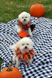 foster city halloween 2011 138 best halloween images on pinterest animals pet costumes and