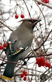 great backyard bird count asks for your help audubon