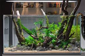 aquascaping layouts with stone and driftwood pin by stephanus mardianto on aquascape pinterest aquariums