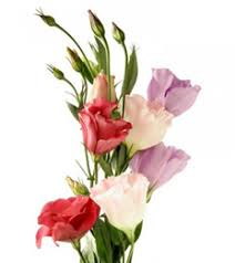 cut flowers send flowers lithuania flower delivery lithuania order flowers