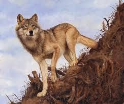 wolf and tree root painting by david stribbling