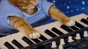 Cat Playing Piano Meme - keyboard cat the soul of a cat youtube