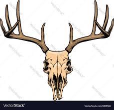 Deer Head by Deer Skull Royalty Free Vector Image Vectorstock
