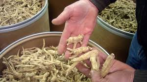 ginseng faq what it is where it u0027s grown uses u0026 commercial value