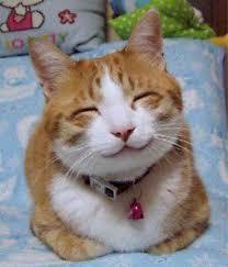 funny cat videos home facebook