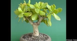 plante de bureau feng shui ces plantes qui nous veulent du bien 12 03 2012 dkomaison