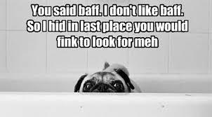 Sad Pug Meme - 11 saddest bath faces of all time rover com