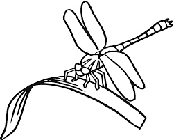 coloring pages flowers 15 merry christmas girls 14692