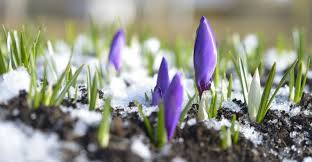 gardening tips for early spring my garden life