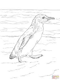 little blue penguin walks coloring page free printable coloring