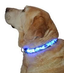 collar light for small dogs lightup led dog collar lights up to keep your pet visible at night