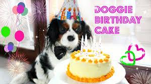 diy dog birthday cake torta di compleanno per cani youtube