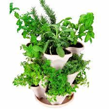 amazon com garden stacker planter indoor outdoor culinary herb