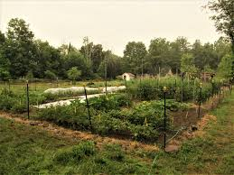 crop rotation for the home garden hudson valley seed co