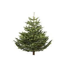 small nordman fir real tree departments diy at b q