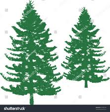pine trees silhouettes realistic looking vector stock vector