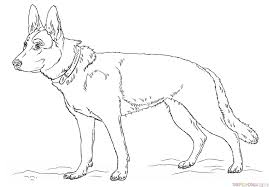 drawn german shepherd easy pencil and in color drawn german