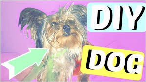 how to make diy halloween costumes for your dogs youtube