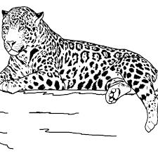 printable pictures realistic animal coloring pages 94 in coloring