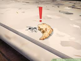 Ants In The Bathroom by Easy Ways To Get Rid Of Ants Naturally Wikihow