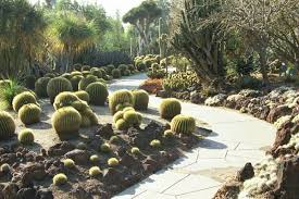 Southern California Botanical Gardens by Huntington Desert Garden San Marino California Favorite