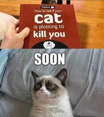 Soon Cat Meme - 24 threatening soons smosh