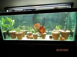 How To Aquascape A Planted Tank A Planted Tank Without Substrate 163949