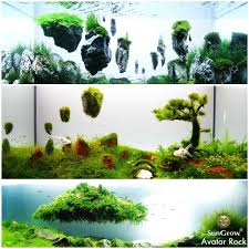 amazon com magical hallelujah floating garden by sungrow