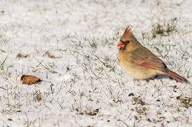 Nj Backyard Birds by Backyard Birds 2016 Hackettstown Nj