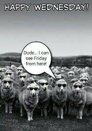 Funny Wednesday Memes - top funny wednesday memes10 funny minions memes