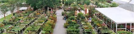 Landscape Nurseries Near Me by Burke Va Perennials Trees U0026 Shrubs For Sale Burke Nursery